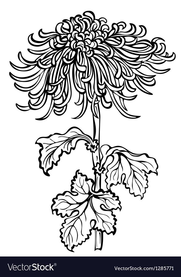 Chrysanthemum flower black vector | Price: 1 Credit (USD $1)