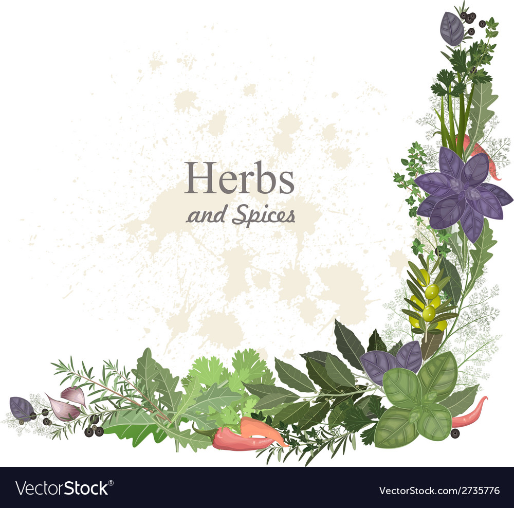 Collection of herbs and spices for you design vector