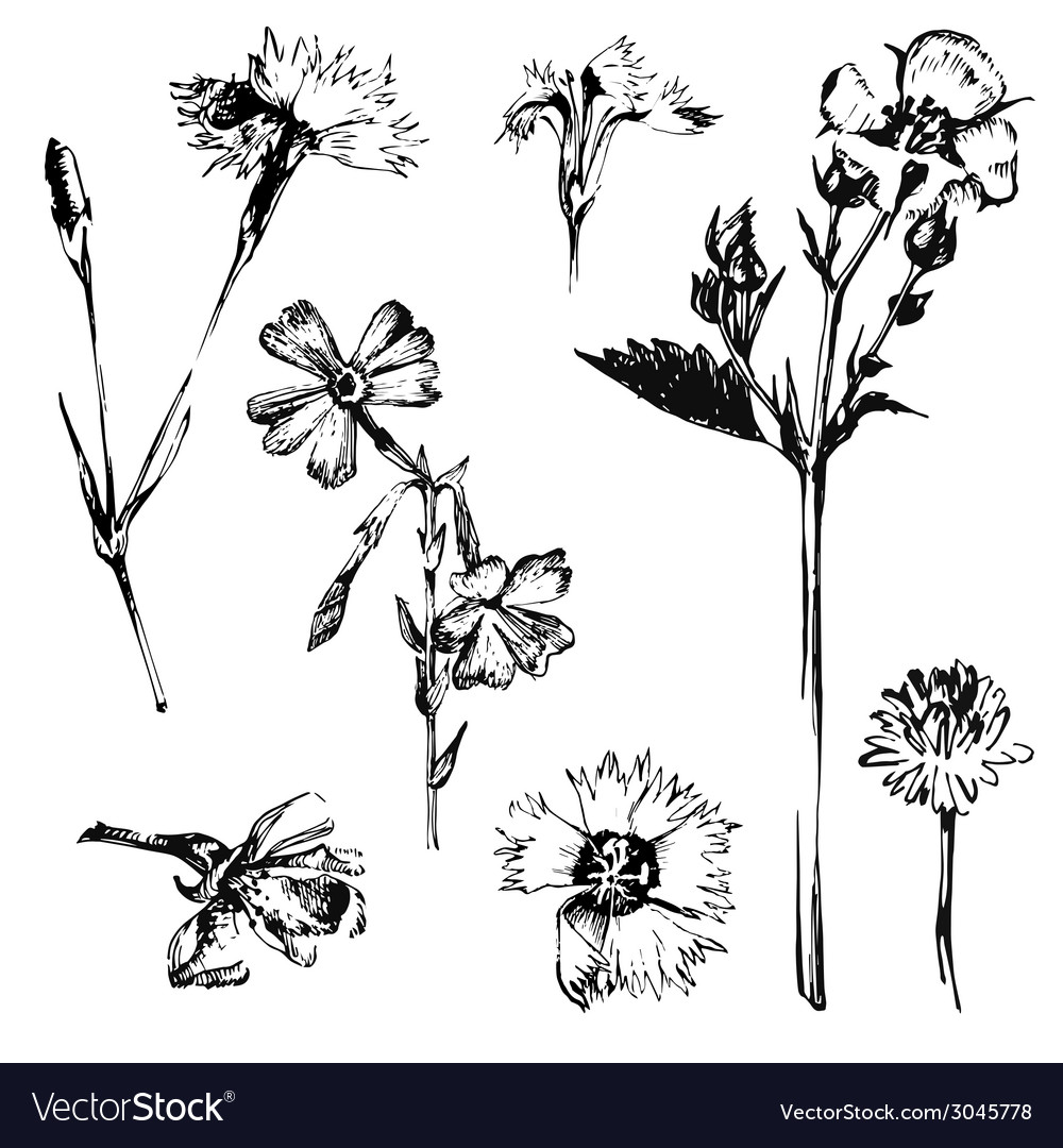 Hand drawn spring flowers vector | Price: 1 Credit (USD $1)