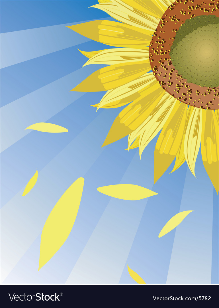 Sun flower background vector | Price: 1 Credit (USD $1)