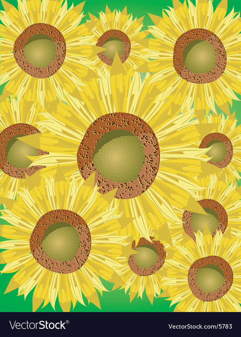Sunflower bed vector | Price: 1 Credit (USD $1)