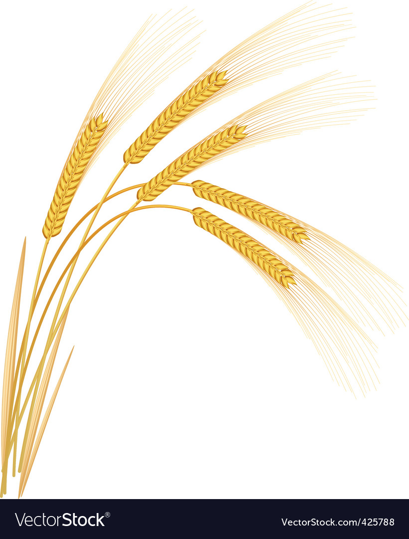 Wheat or rye grass vector | Price: 1 Credit (USD $1)