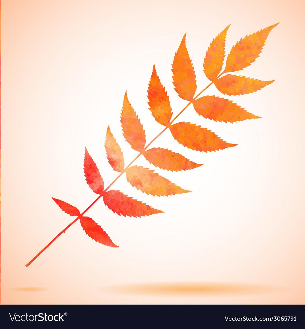 Orange watercolor painted leaf vector   Price: 1 Credit (USD $1)