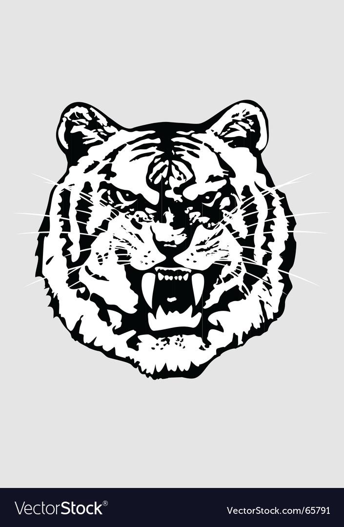 Tiger vector | Price:  Credit (USD $)
