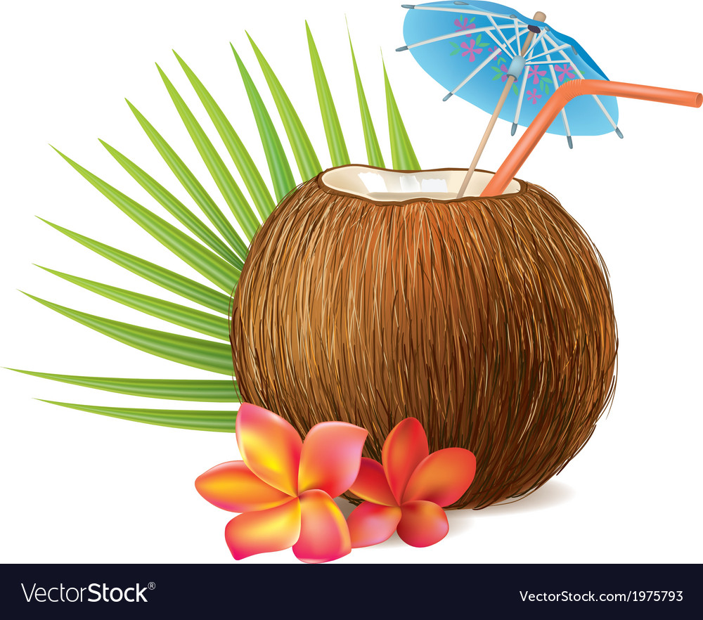 Coconut drink vector | Price: 1 Credit (USD $1)