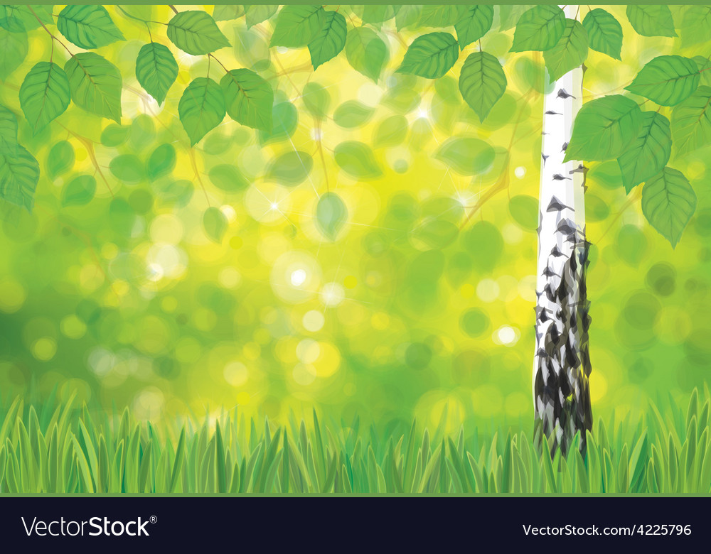Spring birch landscape vector | Price: 1 Credit (USD $1)