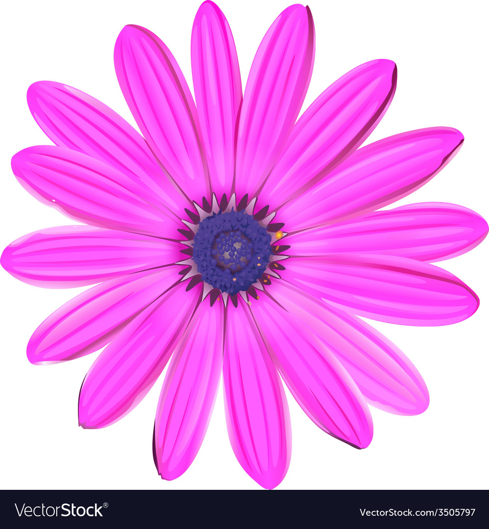 A pink flower vector | Price: 1 Credit (USD $1)