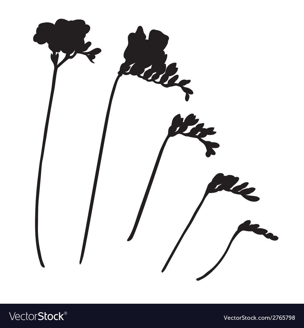 Freesia silhouettes vector | Price: 1 Credit (USD $1)
