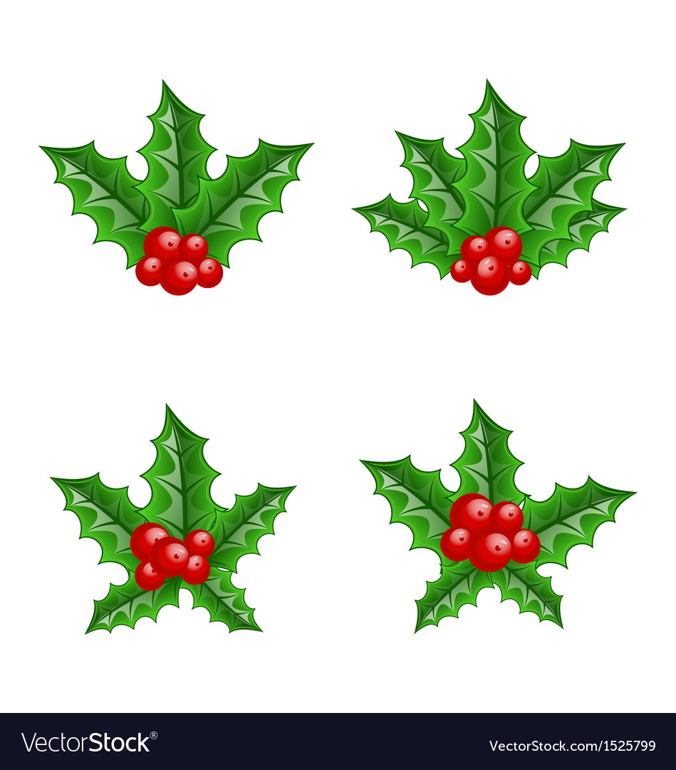 Christmas set holly berry branches vector | Price: 1 Credit (USD $1)