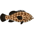 Grouper fish vector