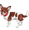 Cute dog chihuahua breed smiling vector