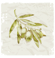 Hand drawn olive branch vector