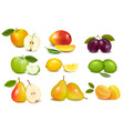 Set of color fruit vector