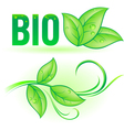 Bio word with leaf elements vector