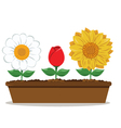 Pot with different flowers vector