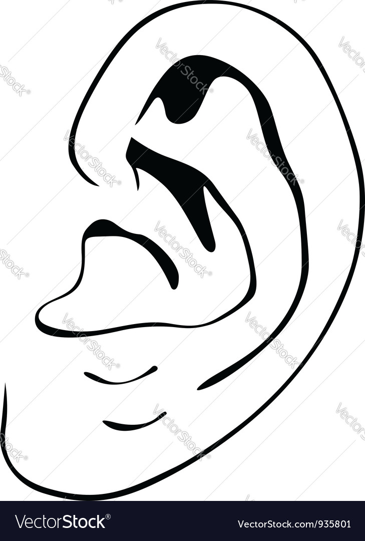 Human ear vector | Price: 1 Credit (USD $1)