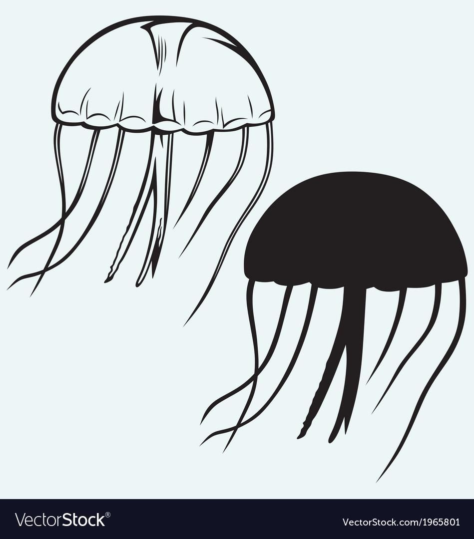 Jellyfish vector | Price: 1 Credit (USD $1)