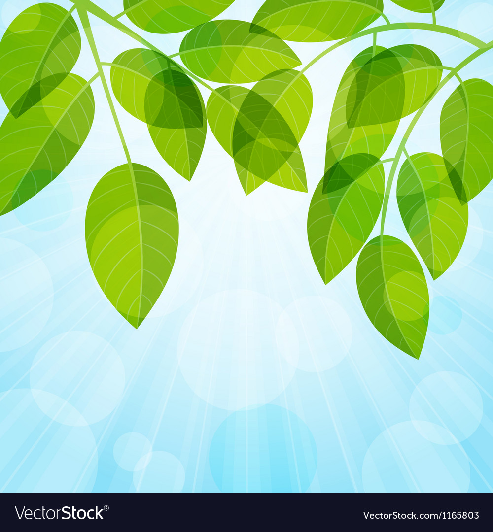 Background with foliage vector | Price: 1 Credit (USD $1)