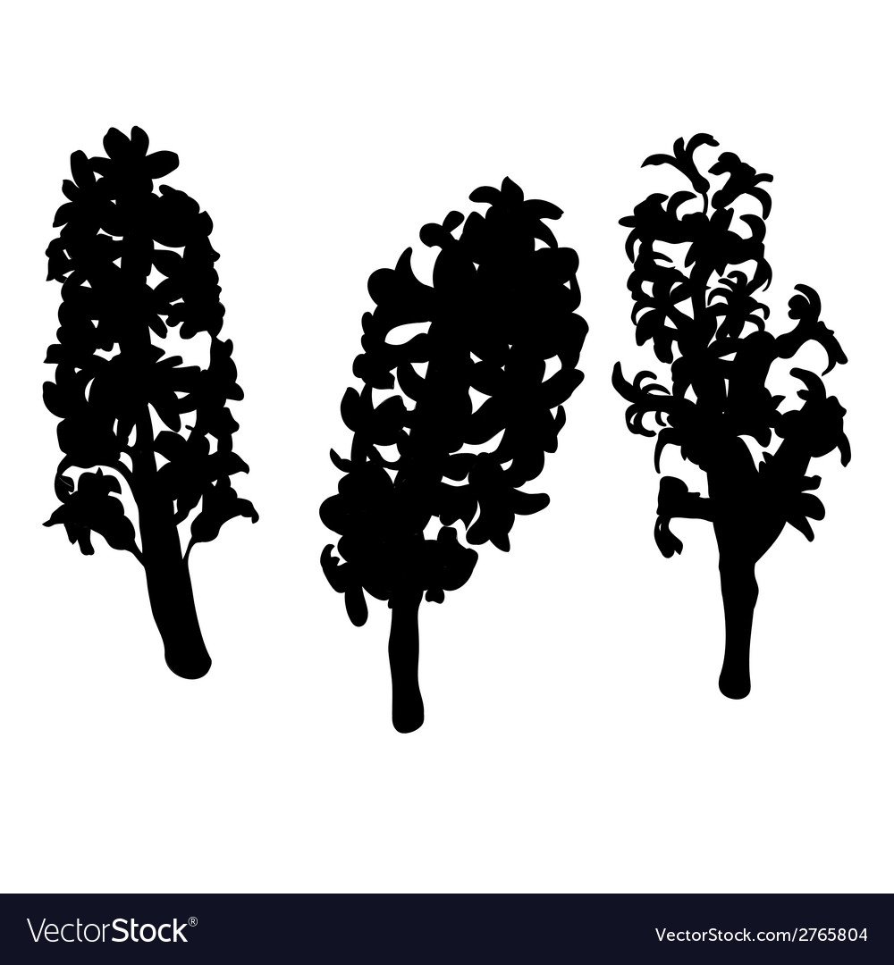 Hyacinth silhouettes vector | Price: 1 Credit (USD $1)