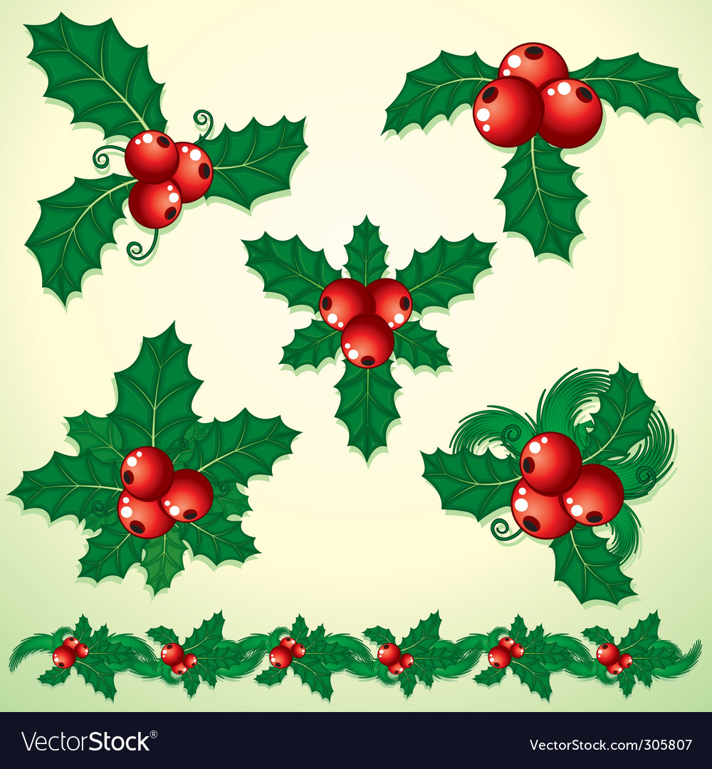 Holly decoration vector | Price: 3 Credit (USD $3)