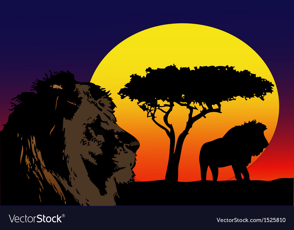 Lions in africa vector | Price: 3 Credit (USD $3)