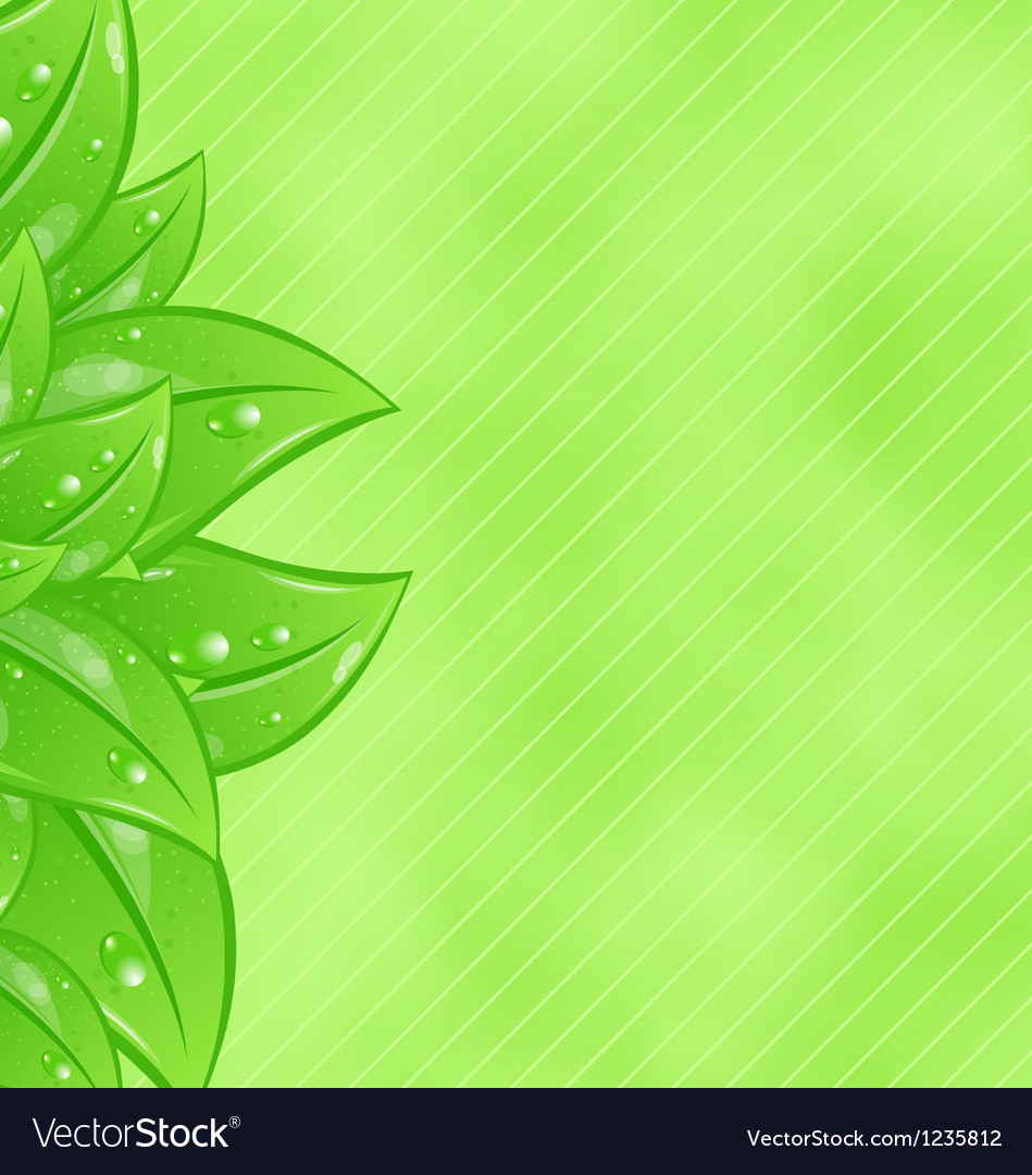 Ecology background with eco green leaves vector   Price: 1 Credit (USD $1)
