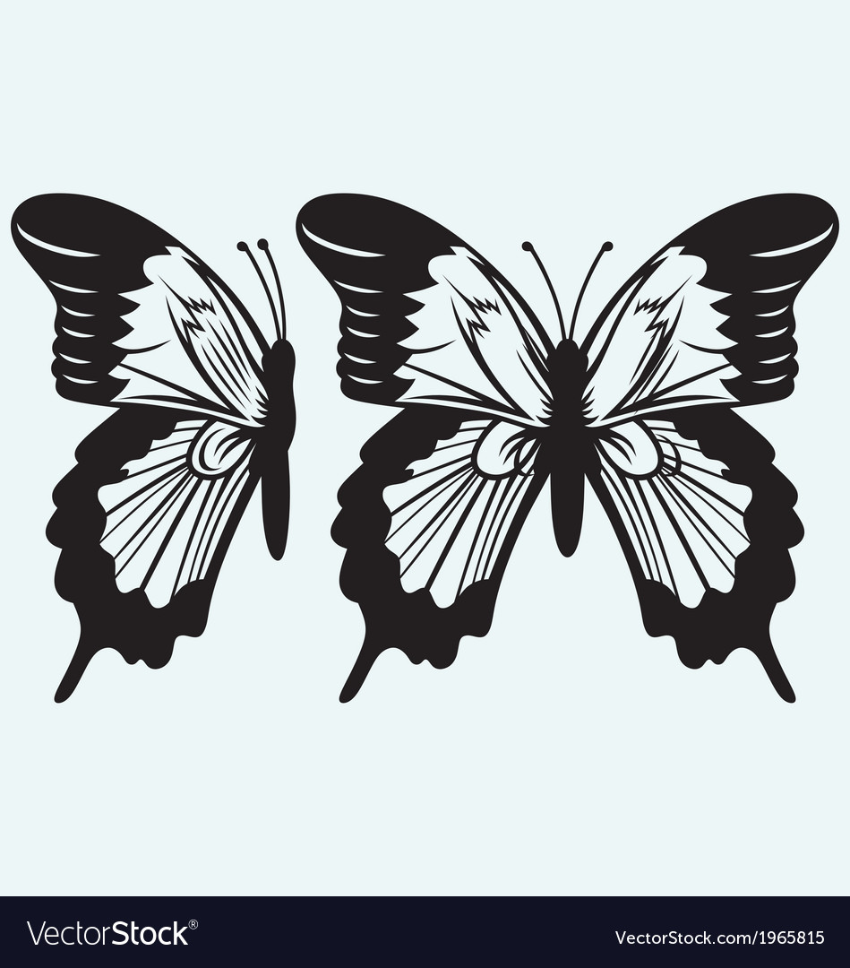 Monarch butterfly with open wings vector | Price: 1 Credit (USD $1)