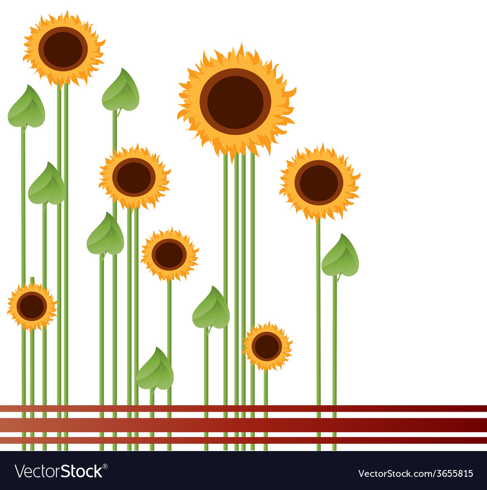Sunflowers-in-a-field vector | Price: 1 Credit (USD $1)