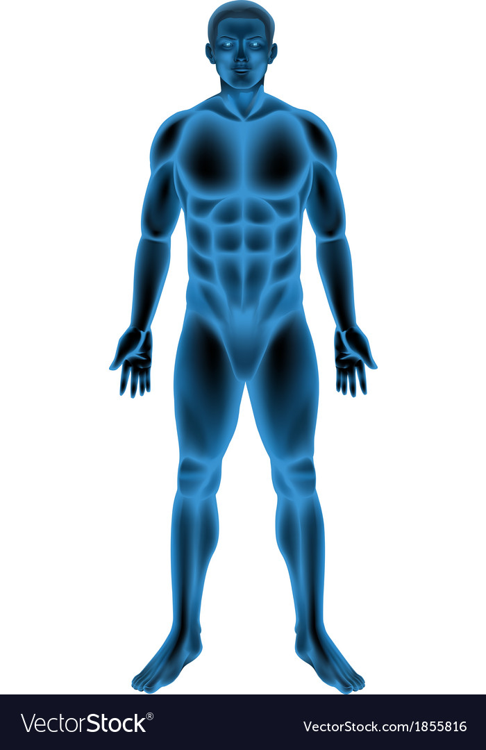Male body vector | Price: 1 Credit (USD $1)
