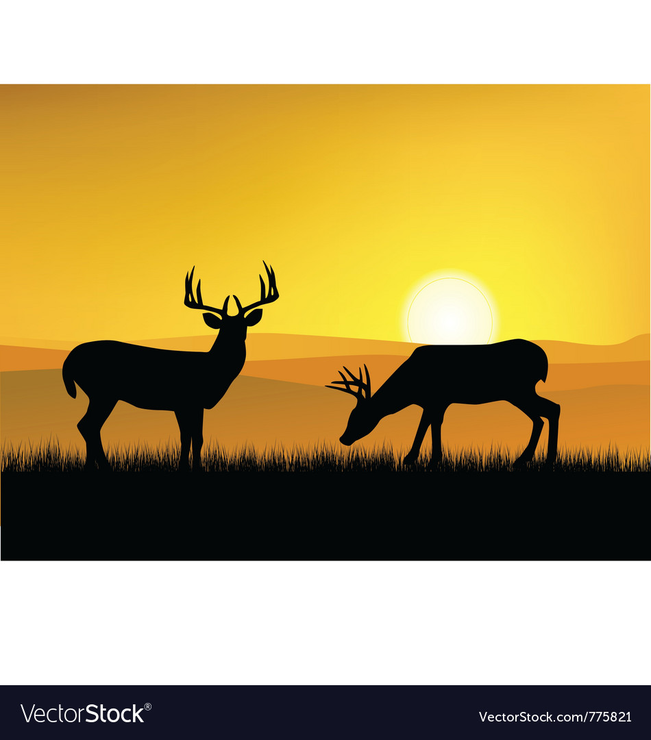Deer with sunset background vector | Price: 1 Credit (USD $1)