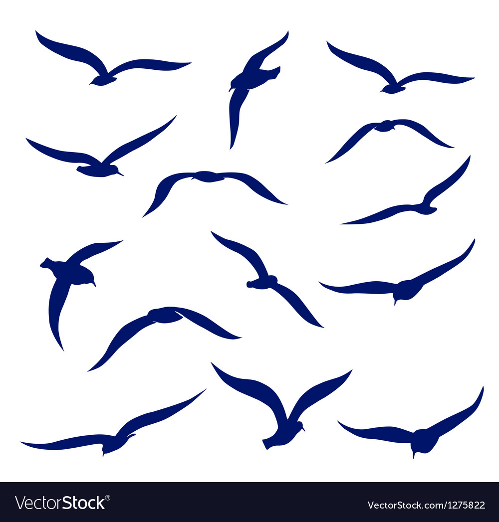 Seagull silhouettes vector | Price: 1 Credit (USD $1)