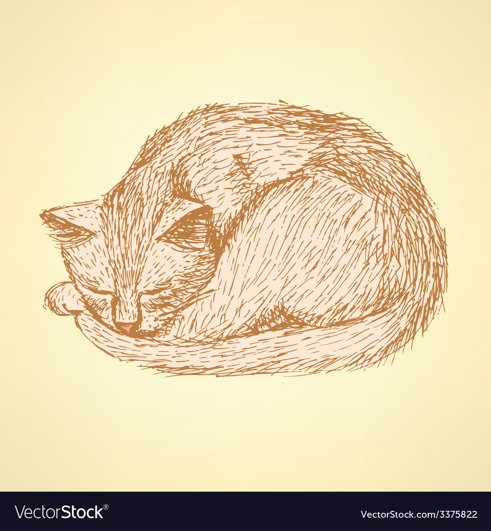Sketch sleeping cat t in vintage style vector | Price: 1 Credit (USD $1)