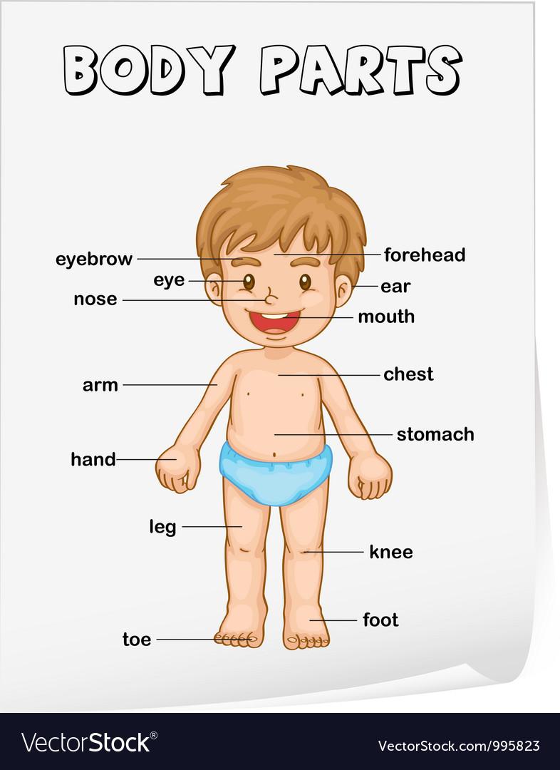 Body parts diagram poster vector | Price: 3 Credit (USD $3)