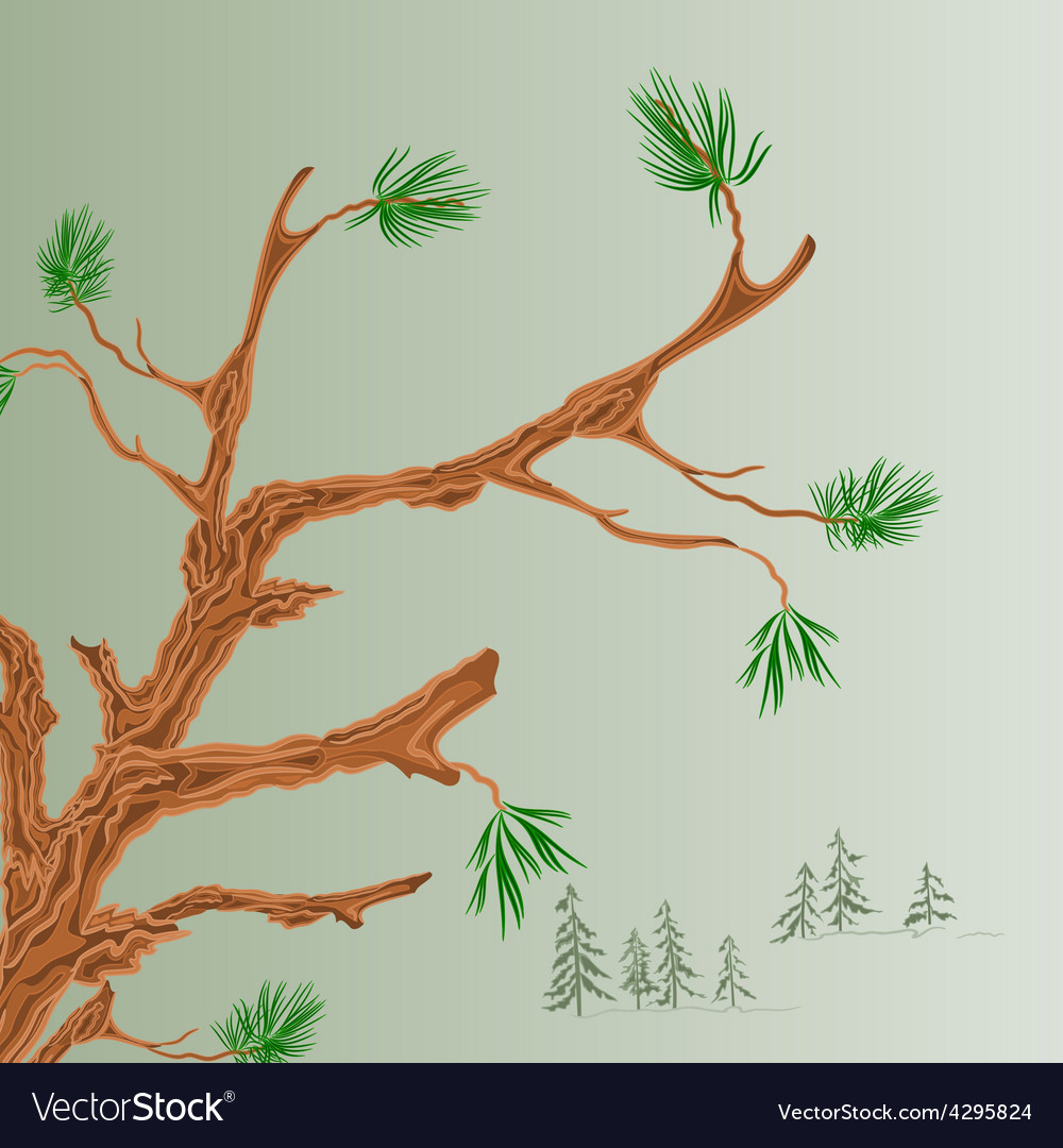 Pine tree old branch coniferous forest background vector | Price: 1 Credit (USD $1)