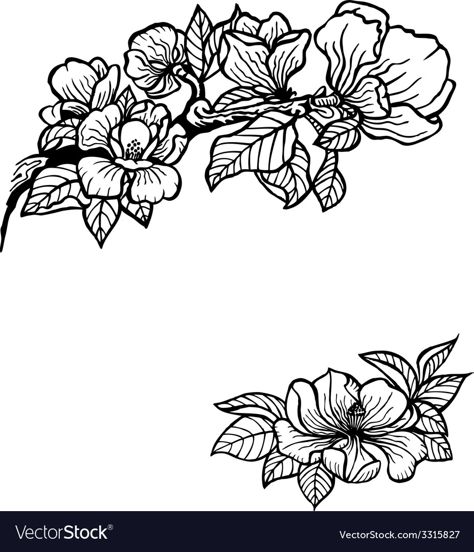 Magnolia vector | Price: 1 Credit (USD $1)