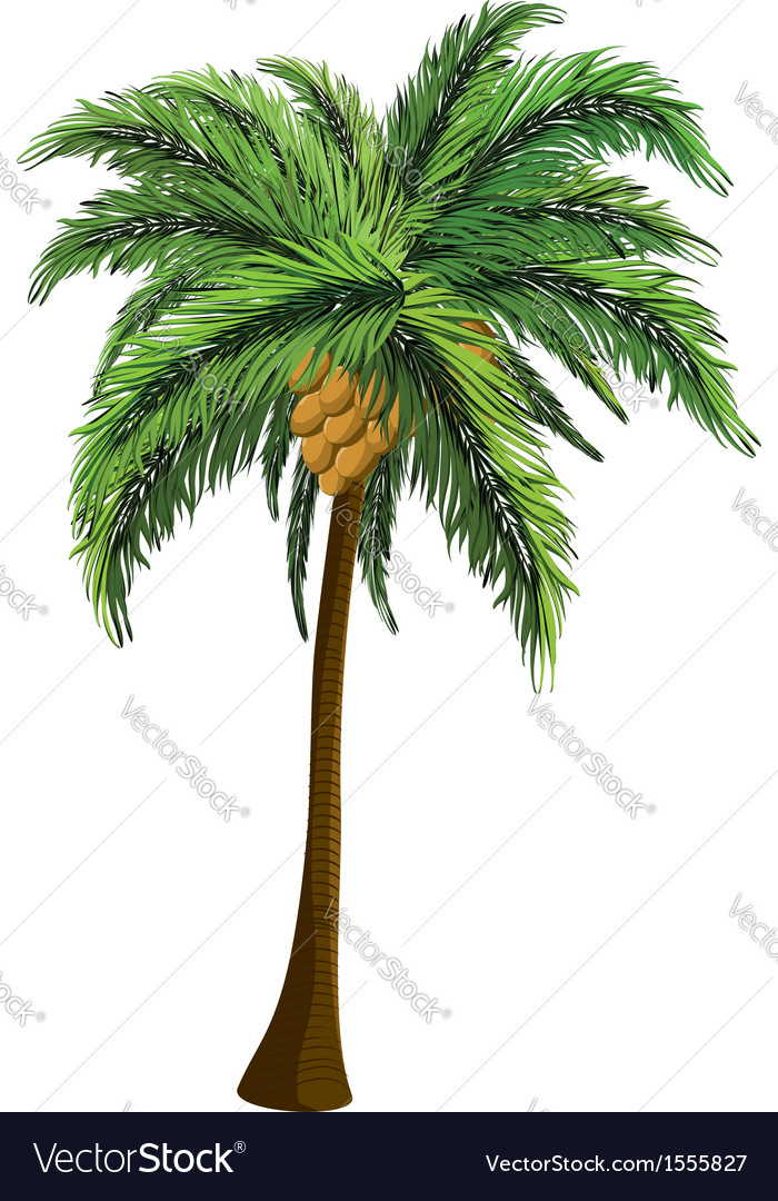 Palm tree with coconut vector | Price: 1 Credit (USD $1)