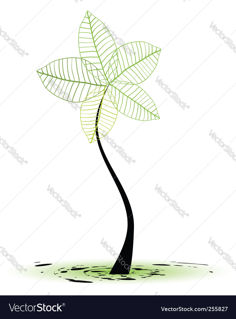 Sapling tree vector | Price: 1 Credit (USD $1)