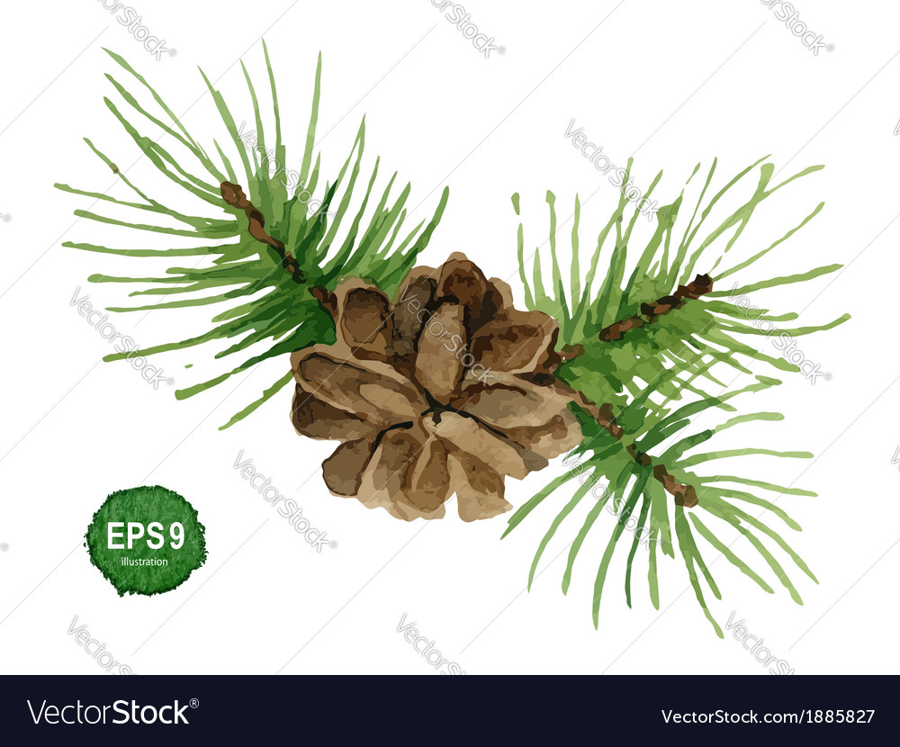 Watercolor pine branch with cone vector | Price: 1 Credit (USD $1)