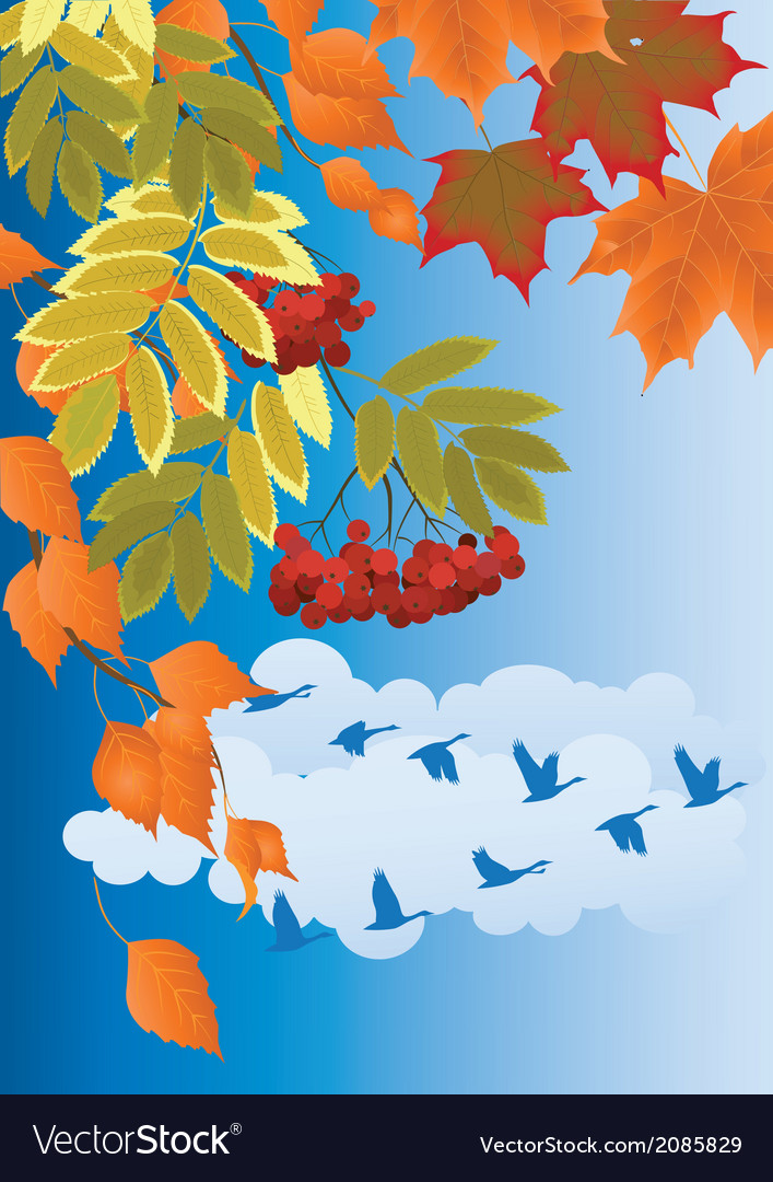 Autumn forest vector | Price: 1 Credit (USD $1)