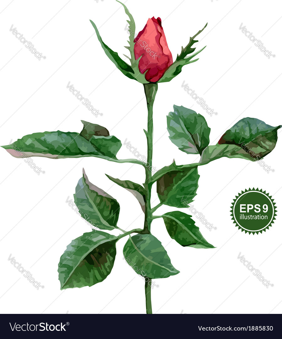 Rose vector | Price: 1 Credit (USD $1)