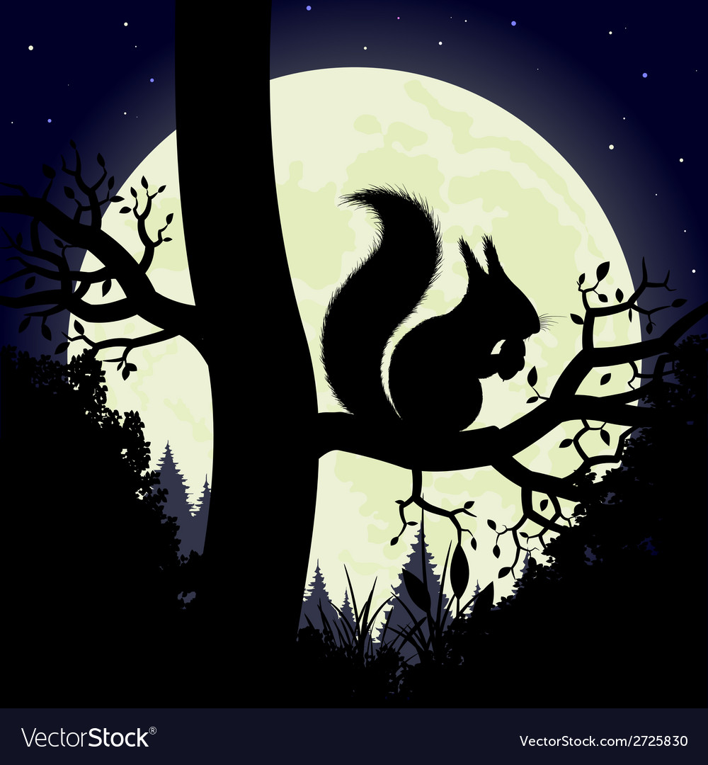 Squirrel on a tree vector | Price: 1 Credit (USD $1)