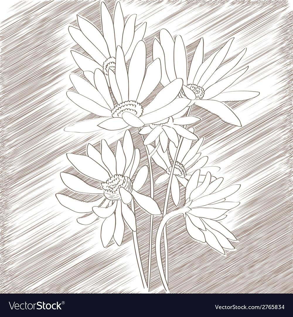 Daisies sketch vector | Price: 1 Credit (USD $1)