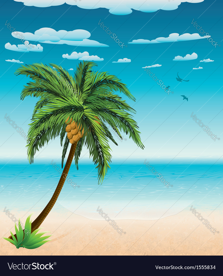 Summer beach and palm vector | Price: 1 Credit (USD $1)