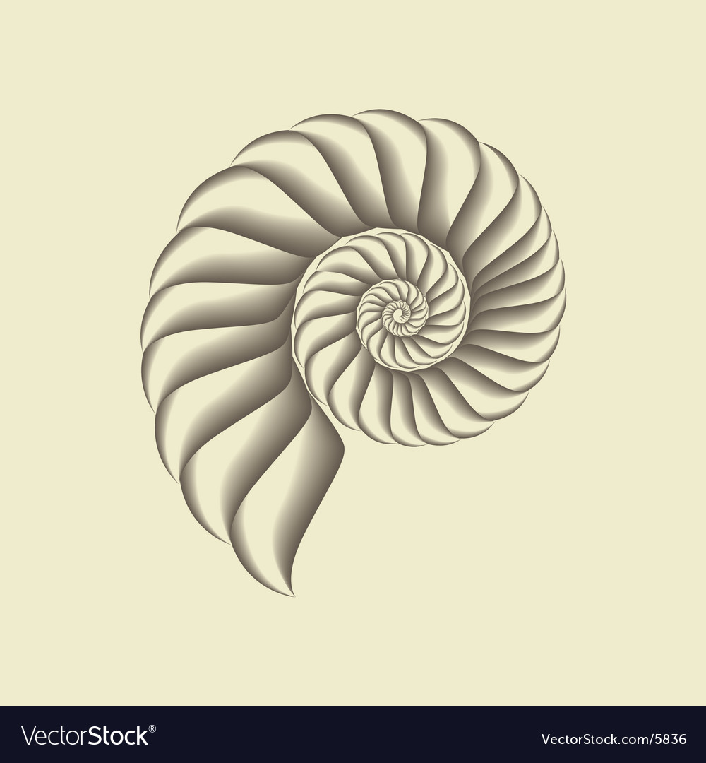 Shell vector | Price: 1 Credit (USD $1)