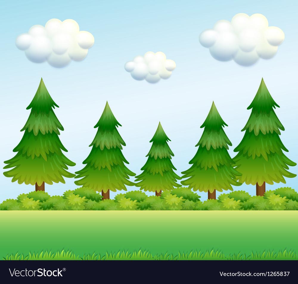 Green pine trees vector | Price: 1 Credit (USD $1)