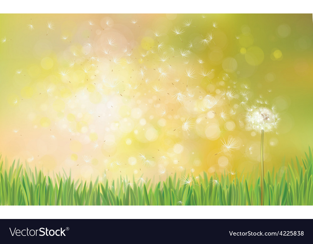 Dandelion spring background vector | Price: 1 Credit (USD $1)