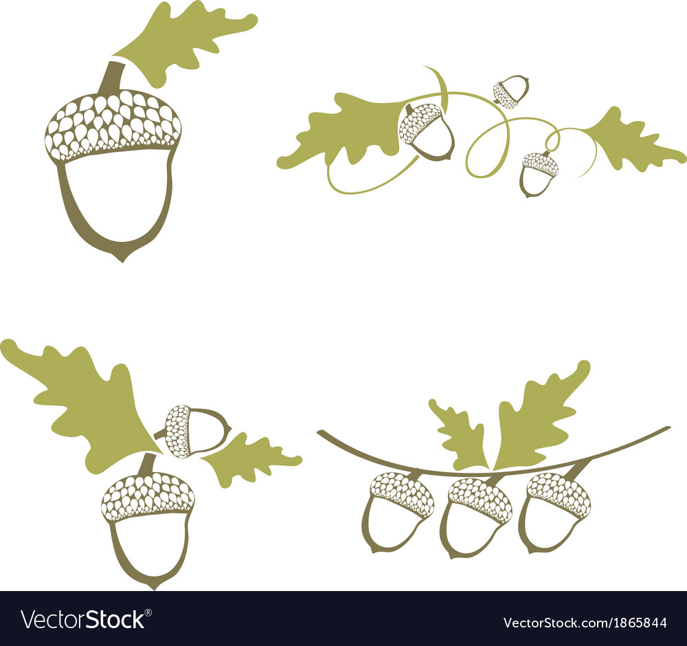 Acorn design collection vector | Price: 1 Credit (USD $1)