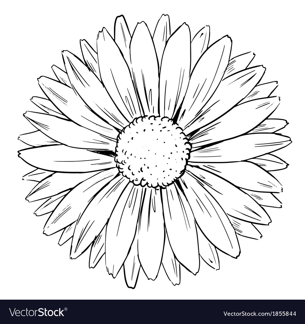 Flower shape and form vector | Price: 1 Credit (USD $1)