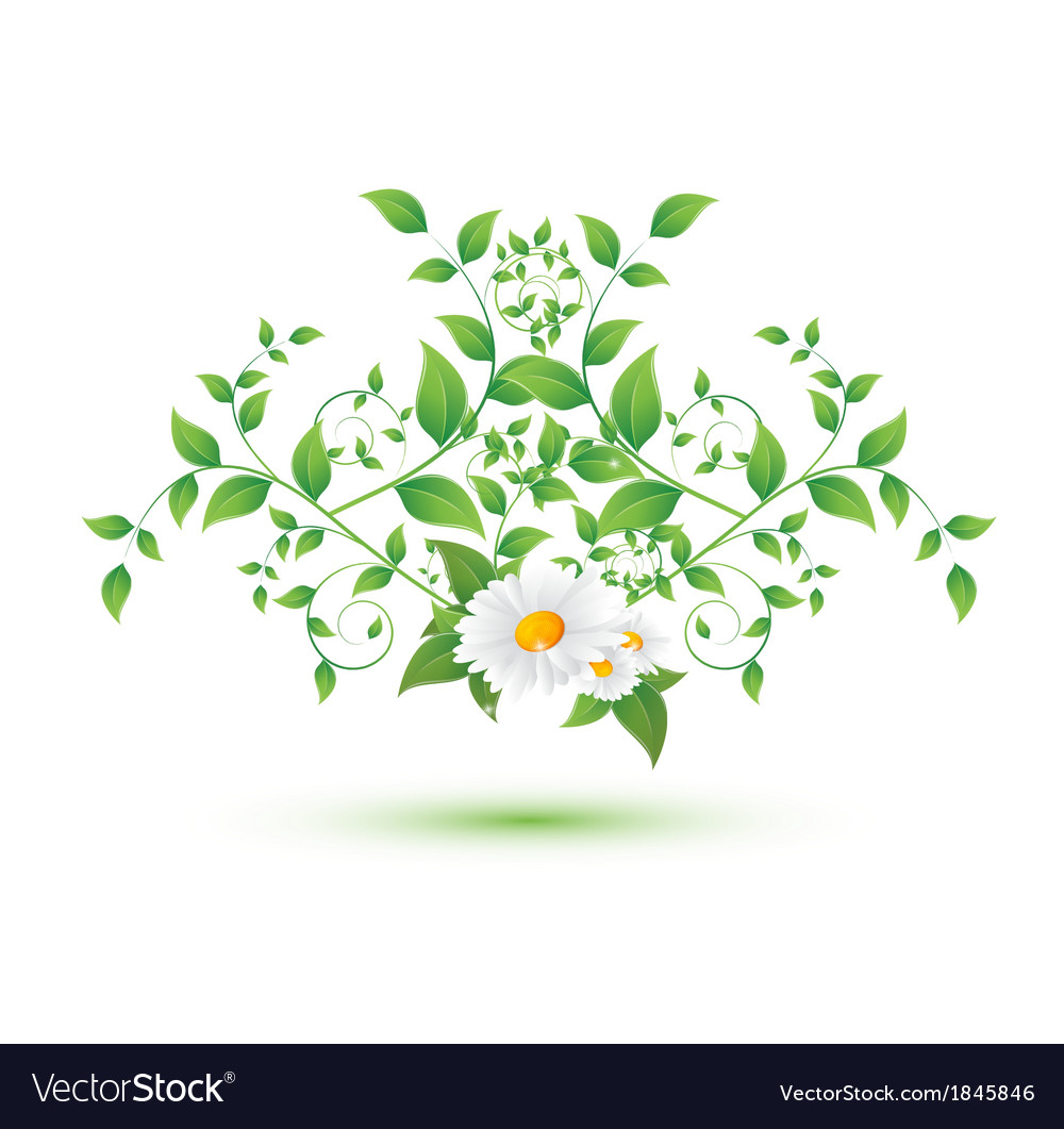 Chamomile flower and green leaves vector | Price: 1 Credit (USD $1)