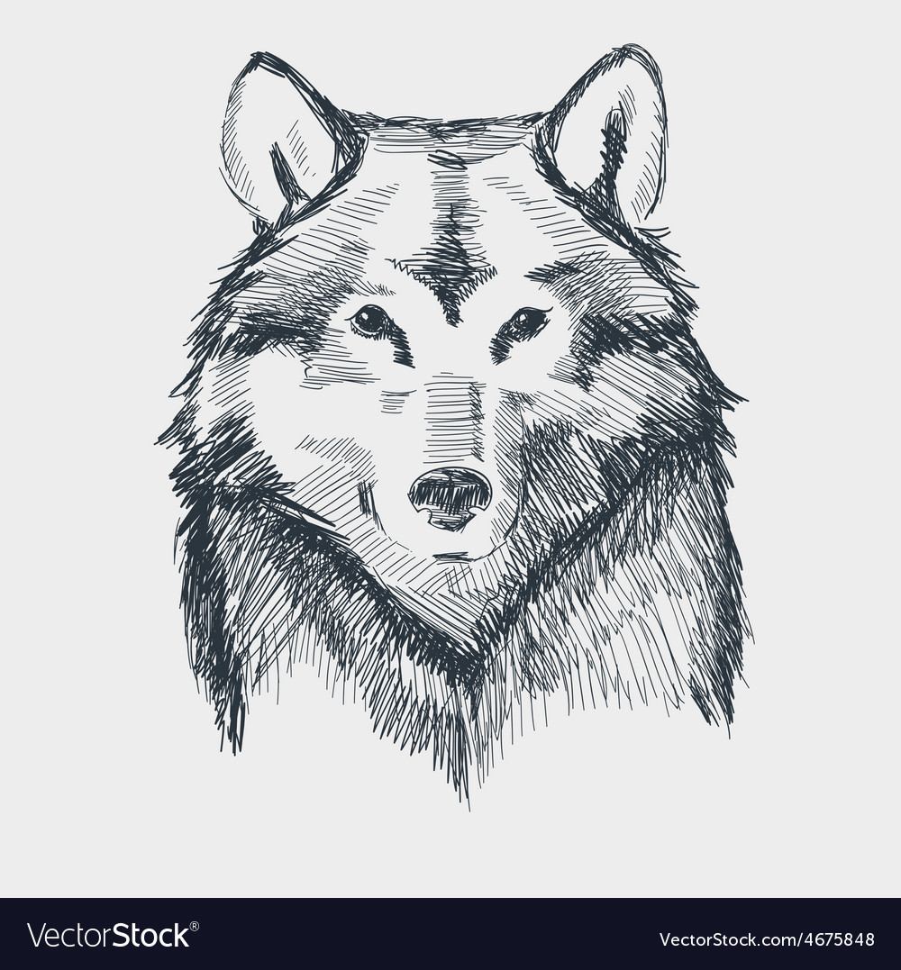 Wolf head grunge hand drawn sketch vector | Price: 1 Credit (USD $1)